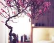 decor-cu-bonsai2