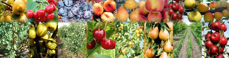 arbusti fructiferi decorativi